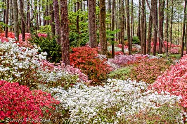 Eye of the big dog callaway gardens pine mountain georgia - Callaway gardens pine mountain georgia ...