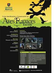 Curso Identificación y Conservación de Aves Rapaces de Chile