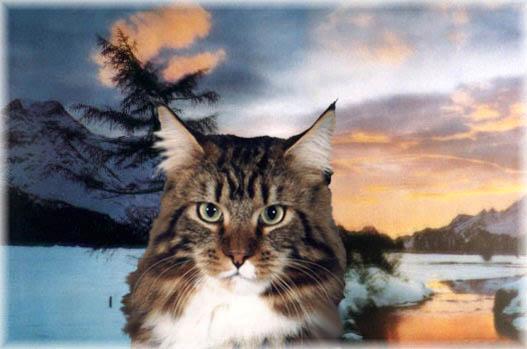 Amici cuccioli gatto d 39 inverno for Il gatto inverno
