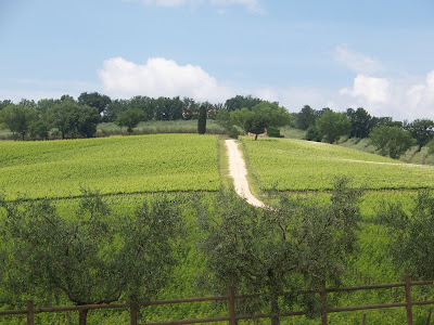 Vineyards Caprai
