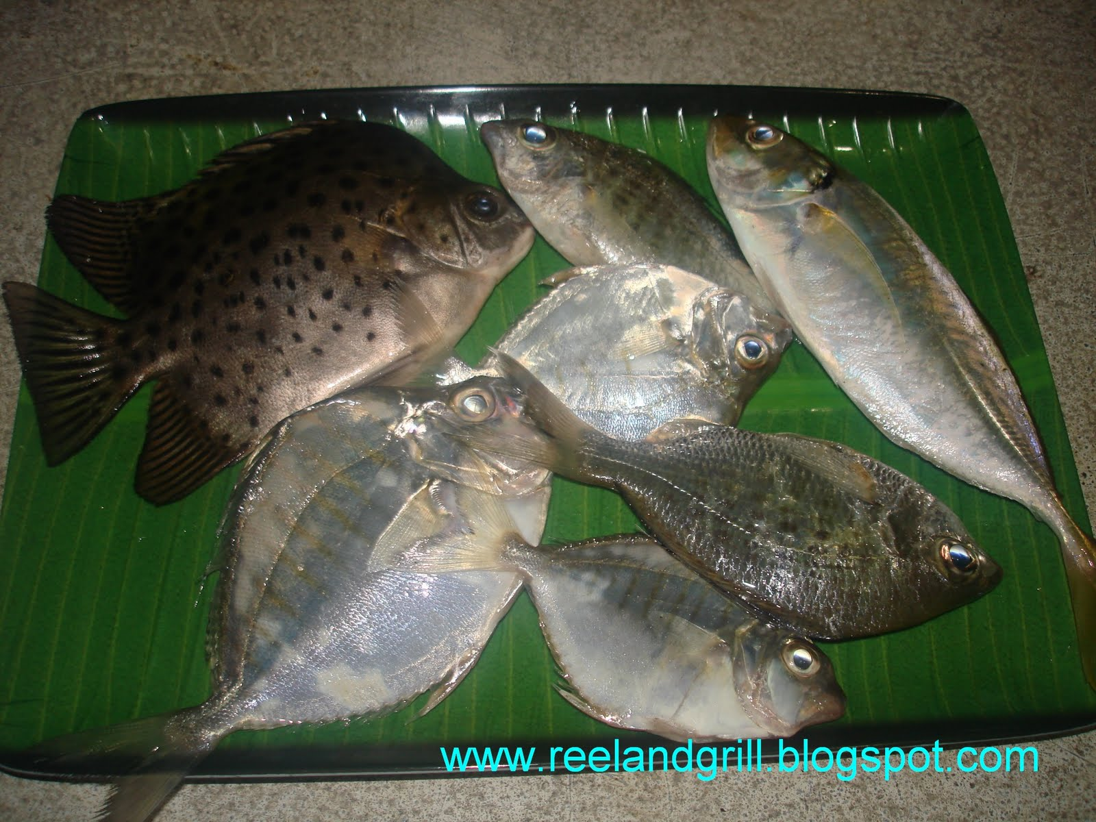 Reel and grill mixed bag of fish from sri lanka waters for Sri lanka fishing