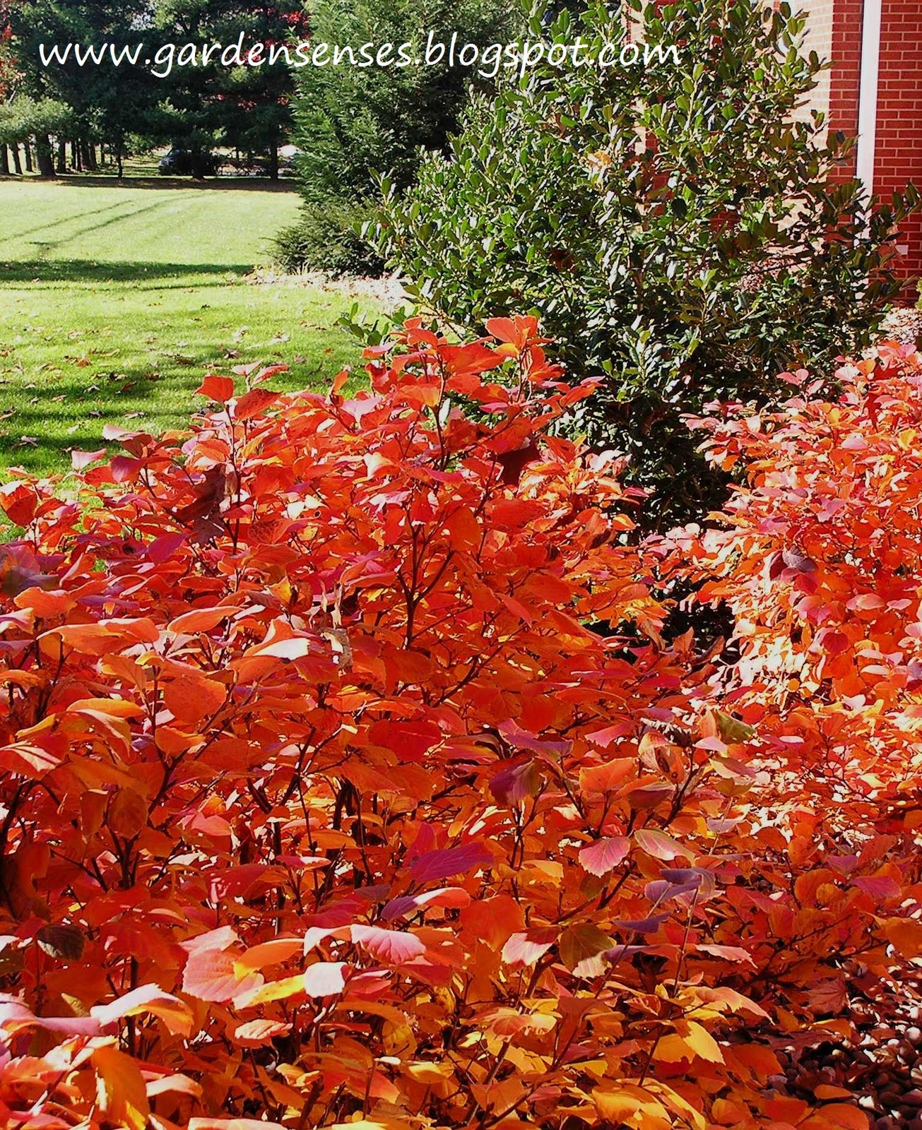 color tree bush - photo #1