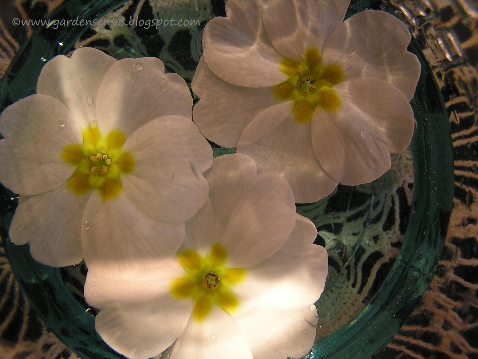 Garden Sense: January 2011