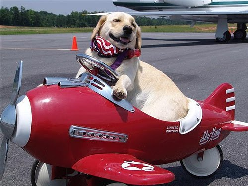 travel tips traveling pets airplanes