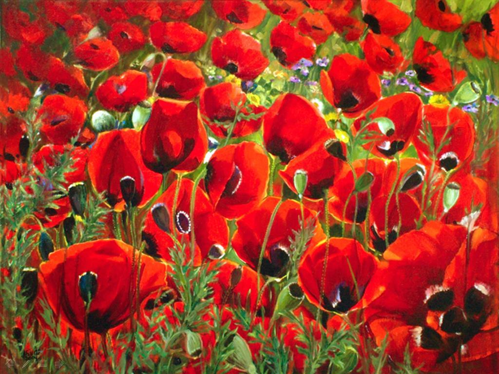 Flowers Of Bangladesh Poppy