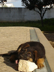 BIONA da Pinheiroca