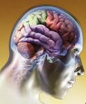 De notre Cerveau, exigeons plus...
