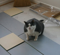 Mosby, a grey and white cat, sitting on the floor tiles.