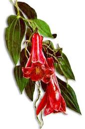 Enciclopedia de la flora Chilena