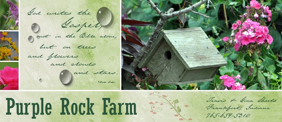 Purpel Rock Farm