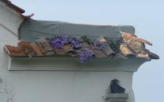 Dried Flower Arrangements For Sale Hydrangea Moon