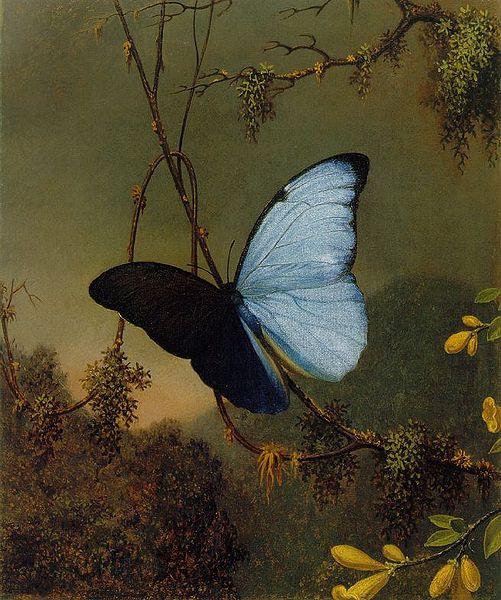 Mariposa Luz De La Luna. a la luz de la luna,