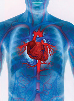 how to develop cardiovascular endurance