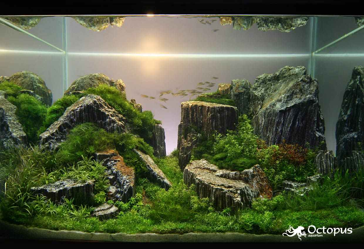 Mario Brothers Aquarium Decorations 17 Best Images About Fish Tank Ideas That Dont Suck On Pinterest