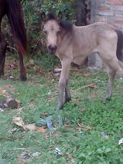 Maltrato a caballos en bolivia 4
