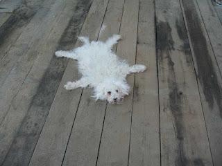 Perros usados como alfombras 21