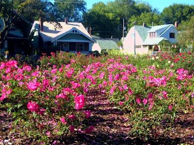 http://3.bp.blogspot.com/_dNe8kOi7OR4/SQgEhd9rrZI/AAAAAAAAAbs/x3EhzMIOGPQ/s400/ladd+rose+garden.JPG