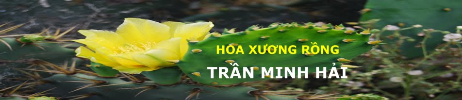 Trần Minh Hải