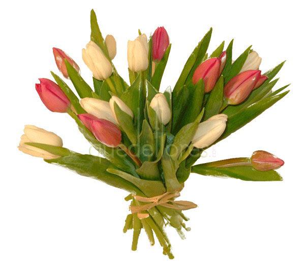 El significado de las flores seg n su color - Significado de los colores de las rosas ...