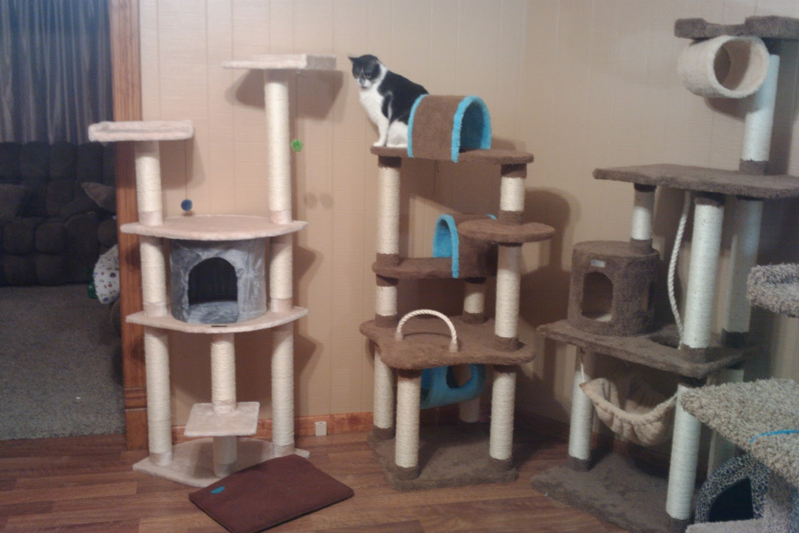 Then we set up Cat Tree #2