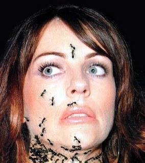 face ants tattoos