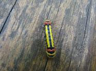 Multicolorida