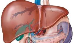 Informatii medicale despre purificarea ficatului