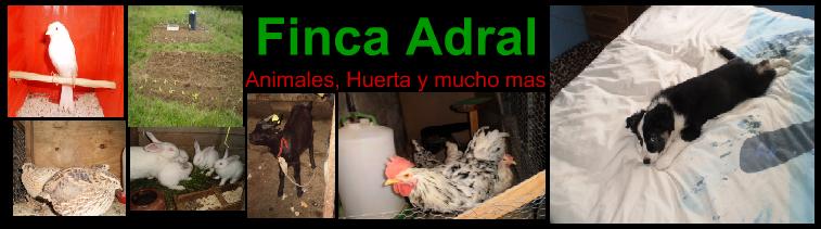 -Finca Adral-