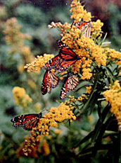 Monarchs
