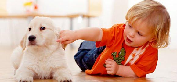 Cachorro ideal para crianças