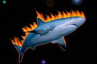 Strategic Sourcing with Firesharks