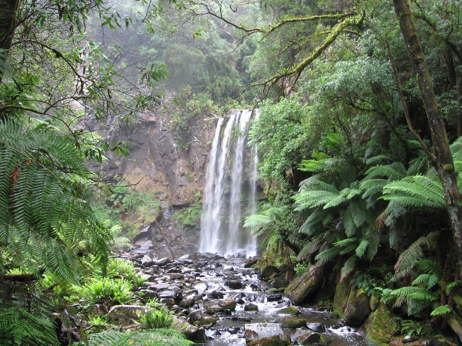 australia an island continent gondwana rainforest