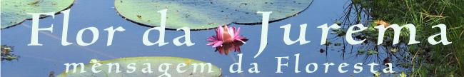 Flor da Jurema