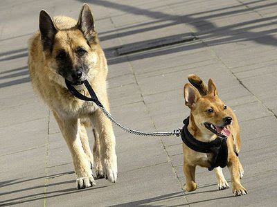 Cómo hacer para que tu perro te haga caso