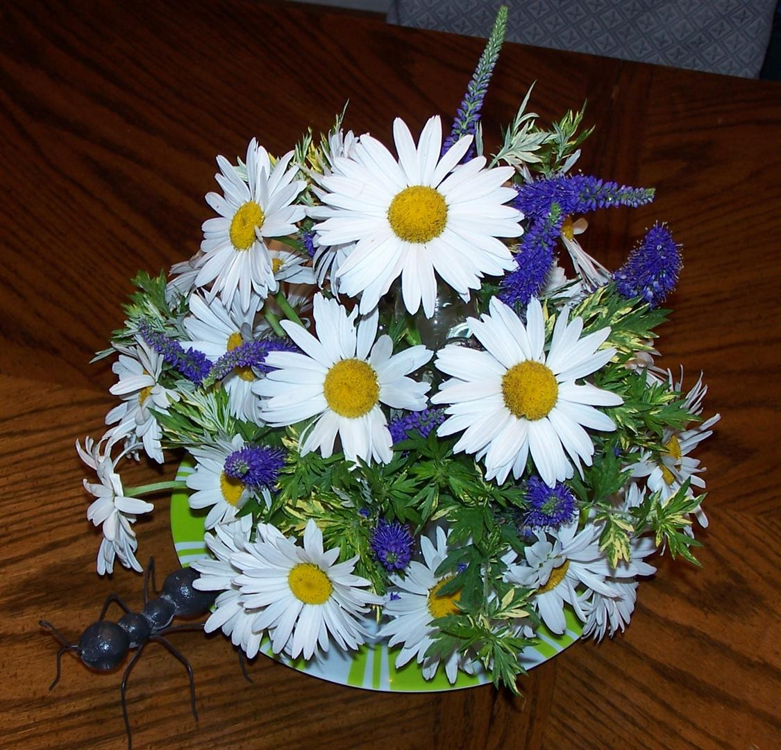 Perennial passion shasta daisies make great centerpieces shasta daisies make great centerpieces izmirmasajfo