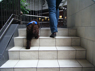 rear view of Alfie going up stairs, stretching those little legs!