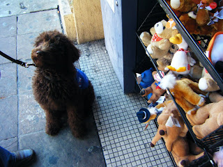 Alfie sitting, focused on me, right next to a bin full of toy stuffed animals