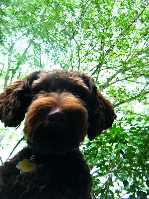 looking up at Alfie's face from beneath; the main feature is his round, brown whiskery snout and big nose
