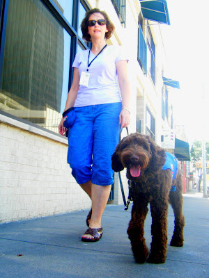 a shot of Alfie & me walking on a downtown sidewalk from about his level; he's panting and happy