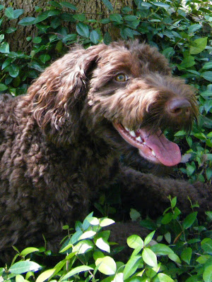 closeup of Alfie's face as he lies in some greenery next to a tree trunk; he's smiling widely and looking up