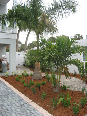 backyard palm trees landscaping