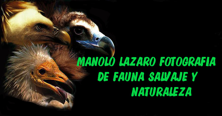 MANOLO LAZARO FOTOGRAFO DE NATURALEZA