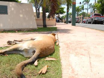 Perro muerto frente al Palacio Nacional