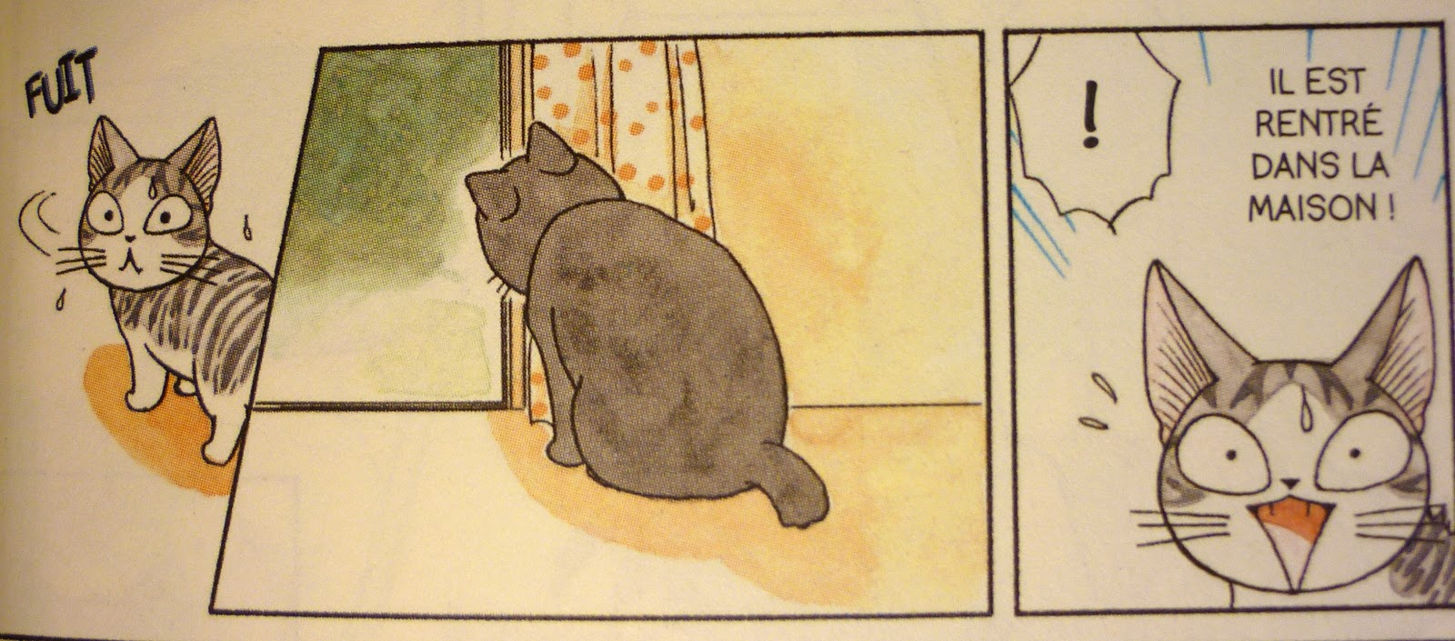 Rencontre 2 chats