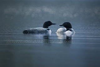 Twilight Loons (c) John Ashley