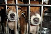 Você se importa com os animais?
