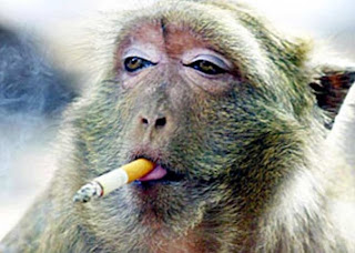 alasan merokok cara berhenti