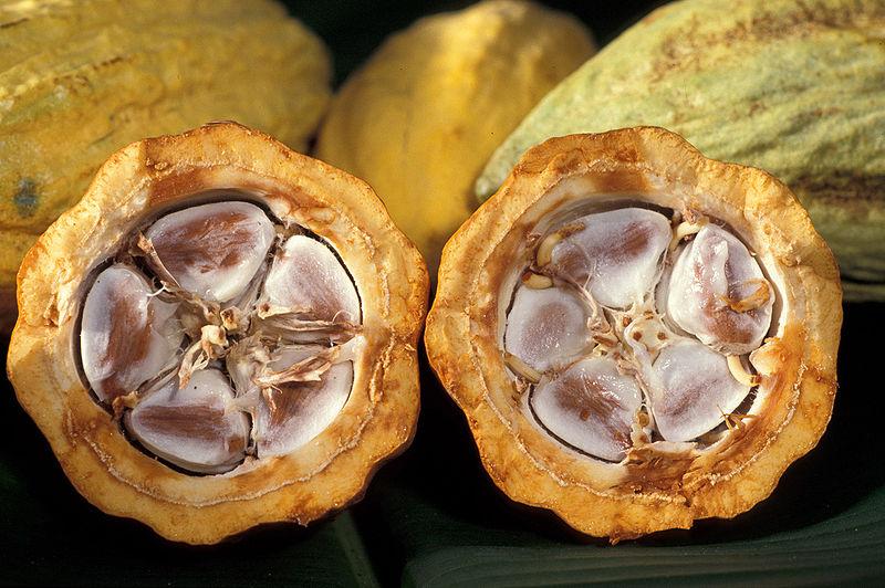 http://3.bp.blogspot.com/_da5gK0Qz3_g/TLvlQBspRAI/AAAAAAAAADE/dK_sK7vo7ys/s1600/800px-cacao-pod-k4636-141.jpg