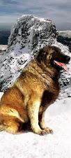 O cão da serra