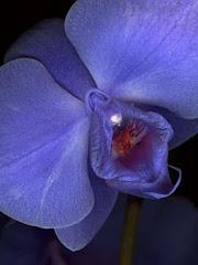 Cunt Flower